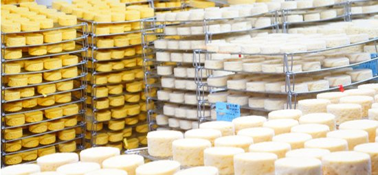 passeio-fabrico-queijo-frances-camembert